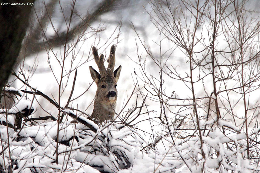 Jagd in Serbien