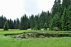 Golija Naturreservat